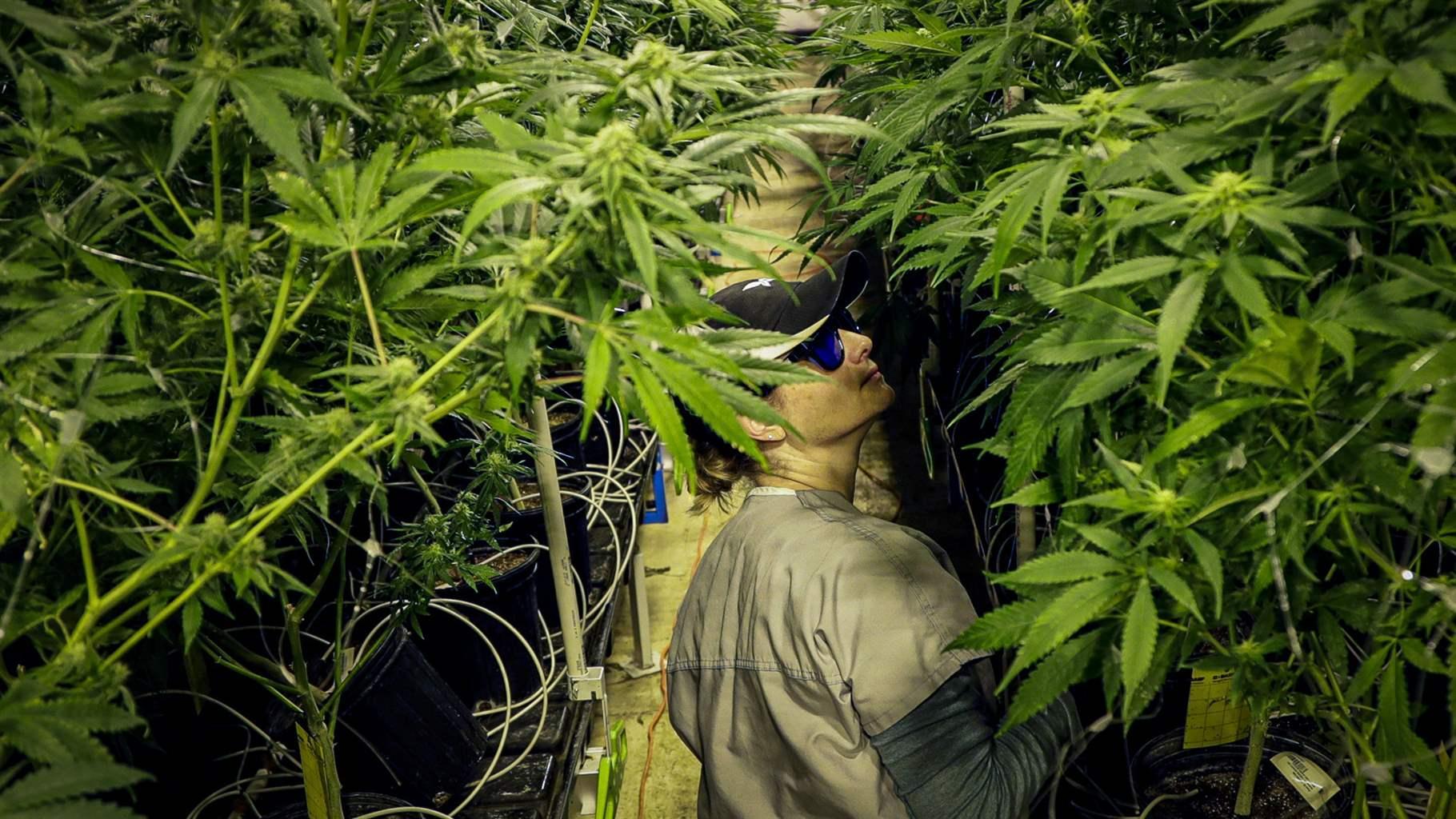 Virginia Weed Businesses